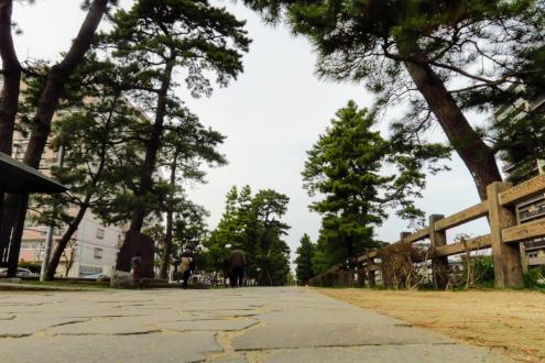 旧日光街道歩き〈草加松原付近〉