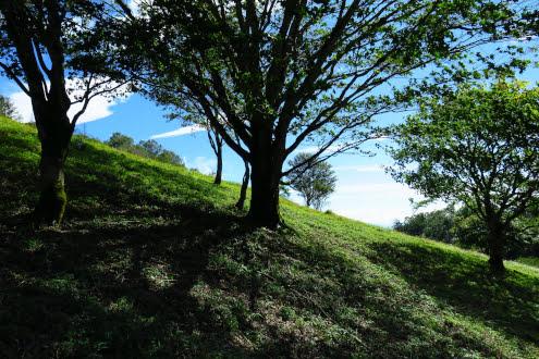 丸川荘の裏の景色