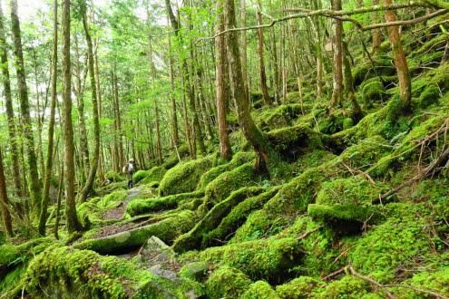 苔の登山道